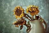 Still Life with Dry Sunflowers