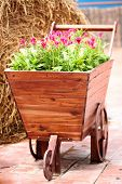 Old Wooden Cart Planted Flowers.
