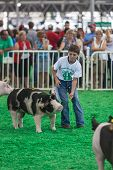 Teen With Pigs At Iowa State Fair