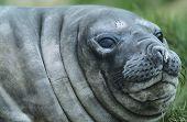 Seals head in water