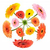 Colorful Flowers Growing On Little Grass Planet
