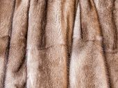 foto of mink  - Product from from natural fur of a mink - JPG