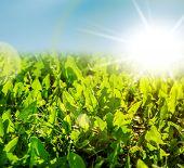 Field Of New Spring Green Grass
