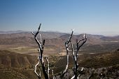 image of anza  - Anza Borrego desert and state park with the city of Borrego Springs in the valley framed by dead twigs - JPG