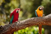 Parrots at Currumbin Wildlife Park