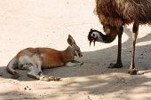 Animals at Currumbin Wildlife Park