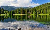 Lago Dei Caprioli - Roe Deer Lake