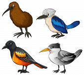 Illustration of four different kind of birds