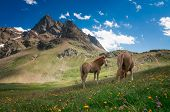 picture of wild horses  - Wild horses in the mountains during the spring season - JPG