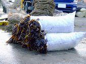 Seaweed