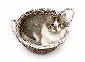 Fluffy Kitten Lying In A Wicker Basket On A White Background