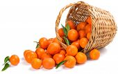 Underlying Basket With Tangerines Spilling On A White