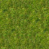 Green Grass on the Lawn.