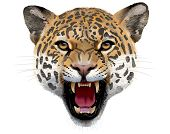 picture of leopard  - The Animal Leopard Head detailed illustration  - JPG