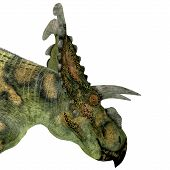 foto of herbivore animal  - Albertaceratops was a herbivorous dinosaur that lived in Upper North America in the Cretaceous Period - JPG