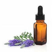 stock photo of essential oil  - Lavender herb flower leaf sprigs with an aromatherapy essential oil dropper bottle over white background - JPG