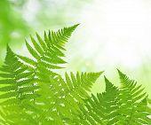 foto of fern  - Fern leaf on green natural background - JPG
