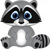pic of raccoon  - cute raccoon on white background - JPG