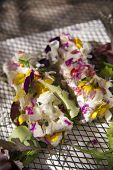 image of edible  - Presentation of goat cheese rolls with edible flowers - JPG