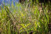 picture of spiderwebs  - Shiny dew on spiderweb - JPG