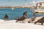 stock photo of sevastopol  - flock of pigeons in the Sevastopol bay - JPG