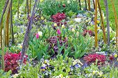picture of forget me not  - Pretty spring flowerbed with pansies forget - JPG