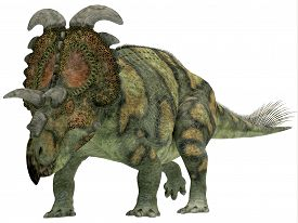 stock photo of herbivore  - Albertaceratops was a herbivorous dinosaur that lived in Upper North America in the Cretaceous Period - JPG