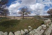Baum, Ruine, Himmel