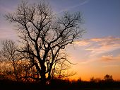 foto of winnebago  - The silhouette of an old oak tree against a blazing Illinois sunset - JPG