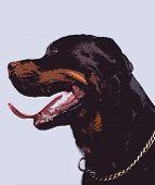 Profile Of Guard Dog