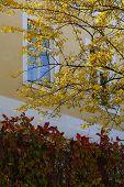 Постер, плакат: Autumn Yellow Tree