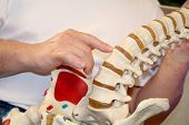 stock photo of chiropractic  - chiropractor pointing at spine - JPG