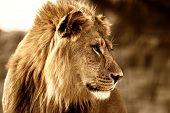 Majestuoso rey