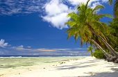 Attractive Palmtrees In Indian Ocean