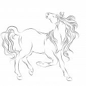 Horse Lineart