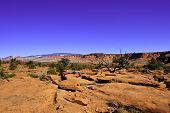Red Rocks And Desert