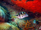 Boxfish, Vietnam, Nha Trang