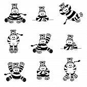 Cute Zebra Set