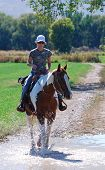 stock photo of paint horse  - Young woman riding paint horse through water on country road.