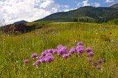 Wild Flowers On Mountain