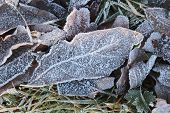 Frost Ice On Forest Leaves. Shining Frosted Leafs Surface. Natural Floral Pattern Background. Macro poster