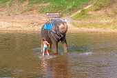 Teen Girl Washes An Elephant With A Brush. The Girl With The Elephant In The Water. An Elephant Spla poster