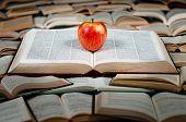 Frutos rojos en libro grande