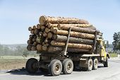 The Truck Transports The Cut Trees. Large Transport Loaded Logging. Timber Transports Lumber. poster