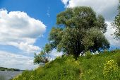 Green Tree And Blue Skies Over River Oka In Russia