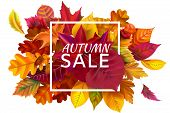 Fall Sale Banner. Autumn Season Sales, Autumnal Discount And Fallen Leaves Banners Frame. October Pu poster