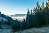 Beautiful Autumn Scenery In Mountains. Coniferous Trees On Steep Slopes Of A Hill. Distant Valley Fu poster