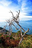 Dead wood 6 kilometres up Mount Kinabalu, Sabah, Malaysia