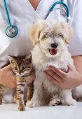 Little dog and cat at the veterinary checkup