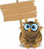 Owl And A Wooden Plaque